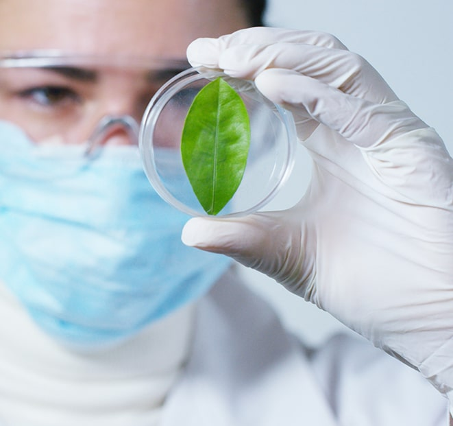 phytodermatologie